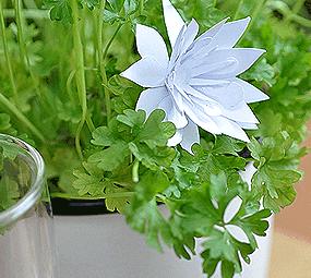 Kräutertöpfe und Papierblumen